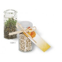 Mini-Glasshouse Ringelblume